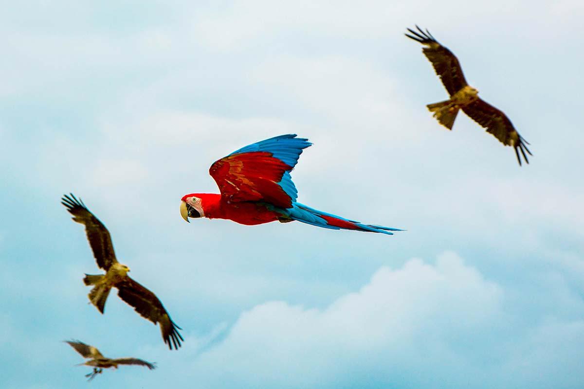 oiseaux beauval
