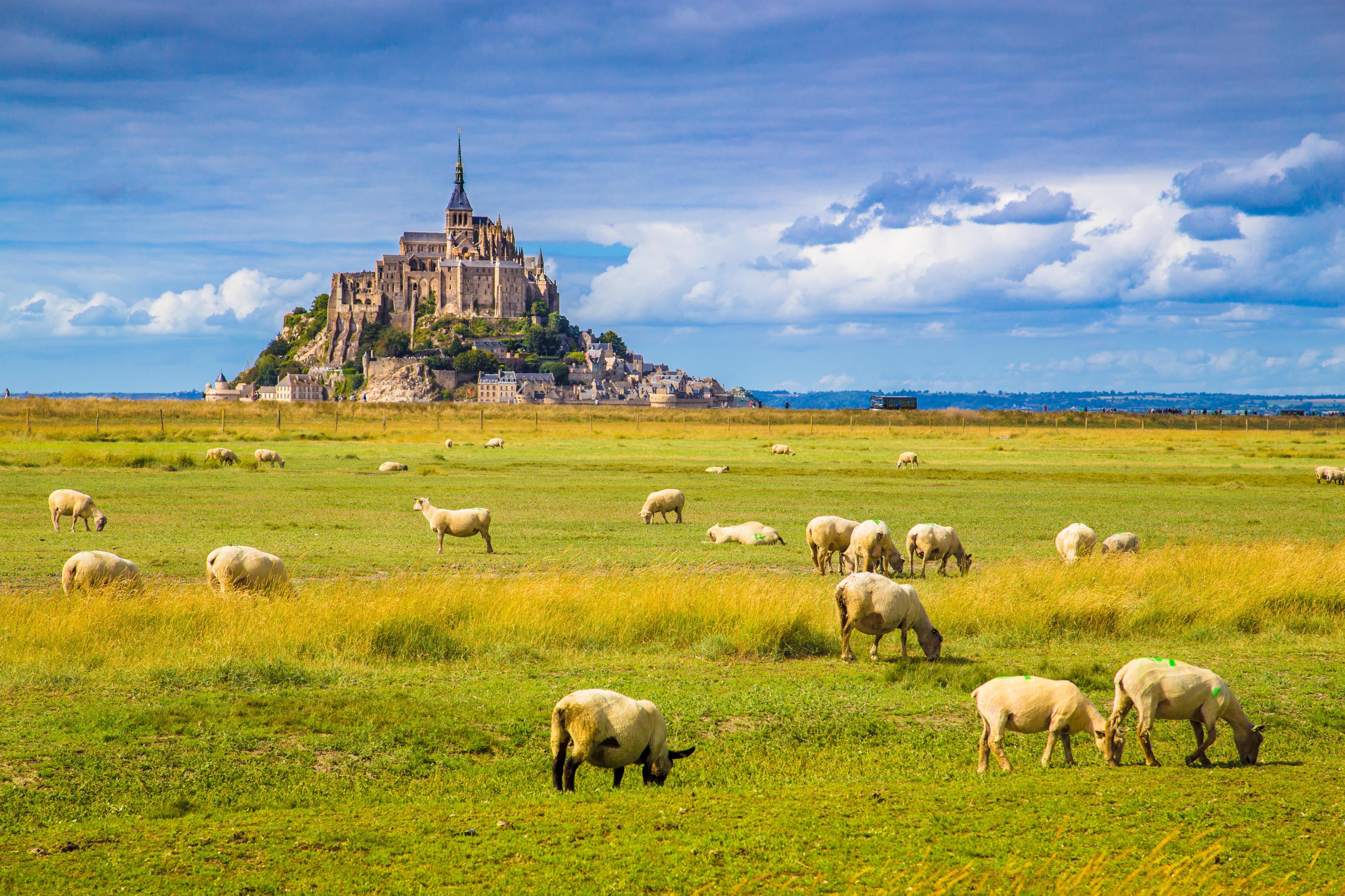 Mont Saint Michel vu avec des prairie et brebis